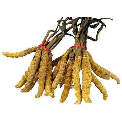 Berberis Aristata Root Extract
